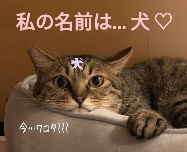 f:id:Ayako28:20180712153352j:plain