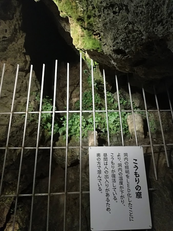 f:id:Ayatamama:20180507113823j:plain