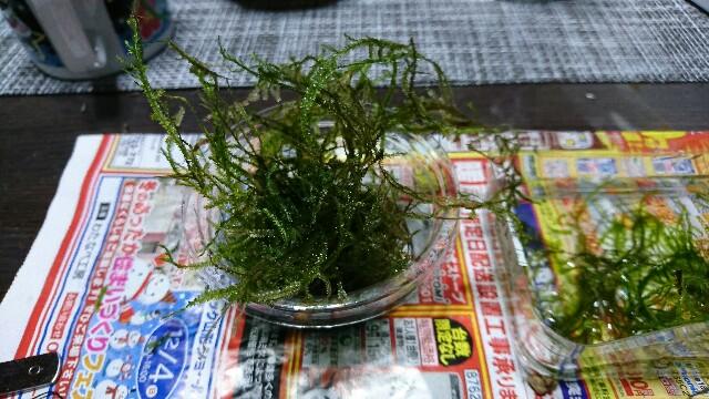 f:id:Azusa116:20161202234539j:image
