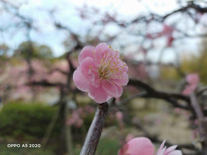f:id:Azusa_Hirano:20200215165425j:plain
