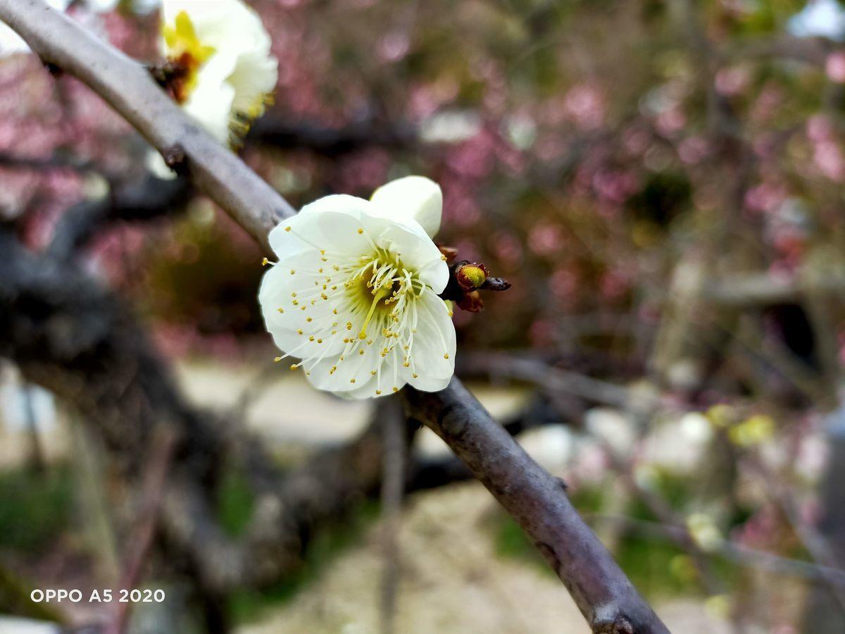 f:id:Azusa_Hirano:20200215170919j:plain