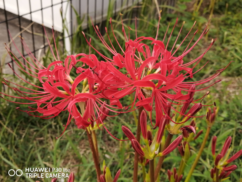 f:id:Azusa_Hirano:20200923132445j:plain