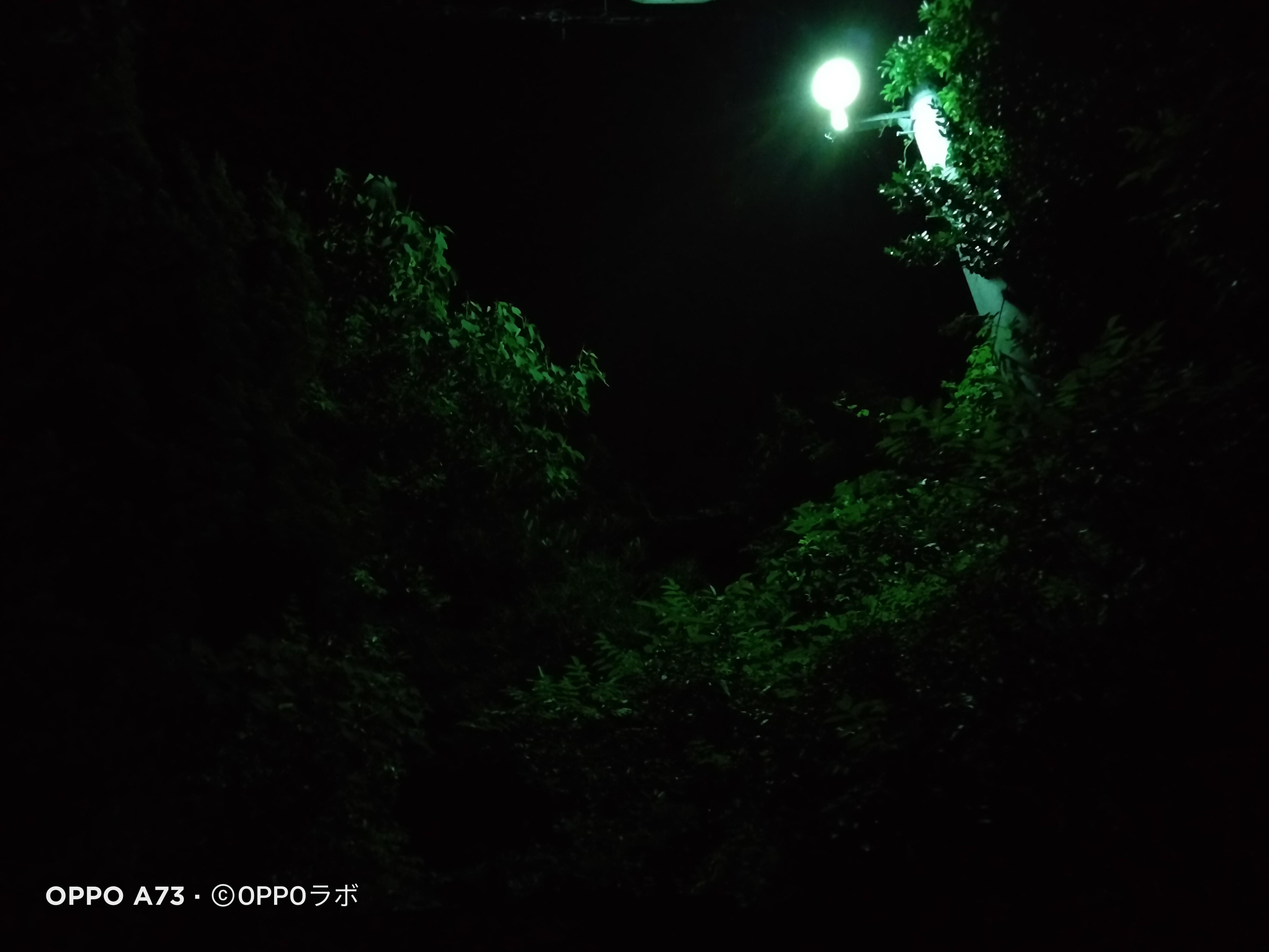 f:id:Azusa_Hirano:20210705112747j:plain