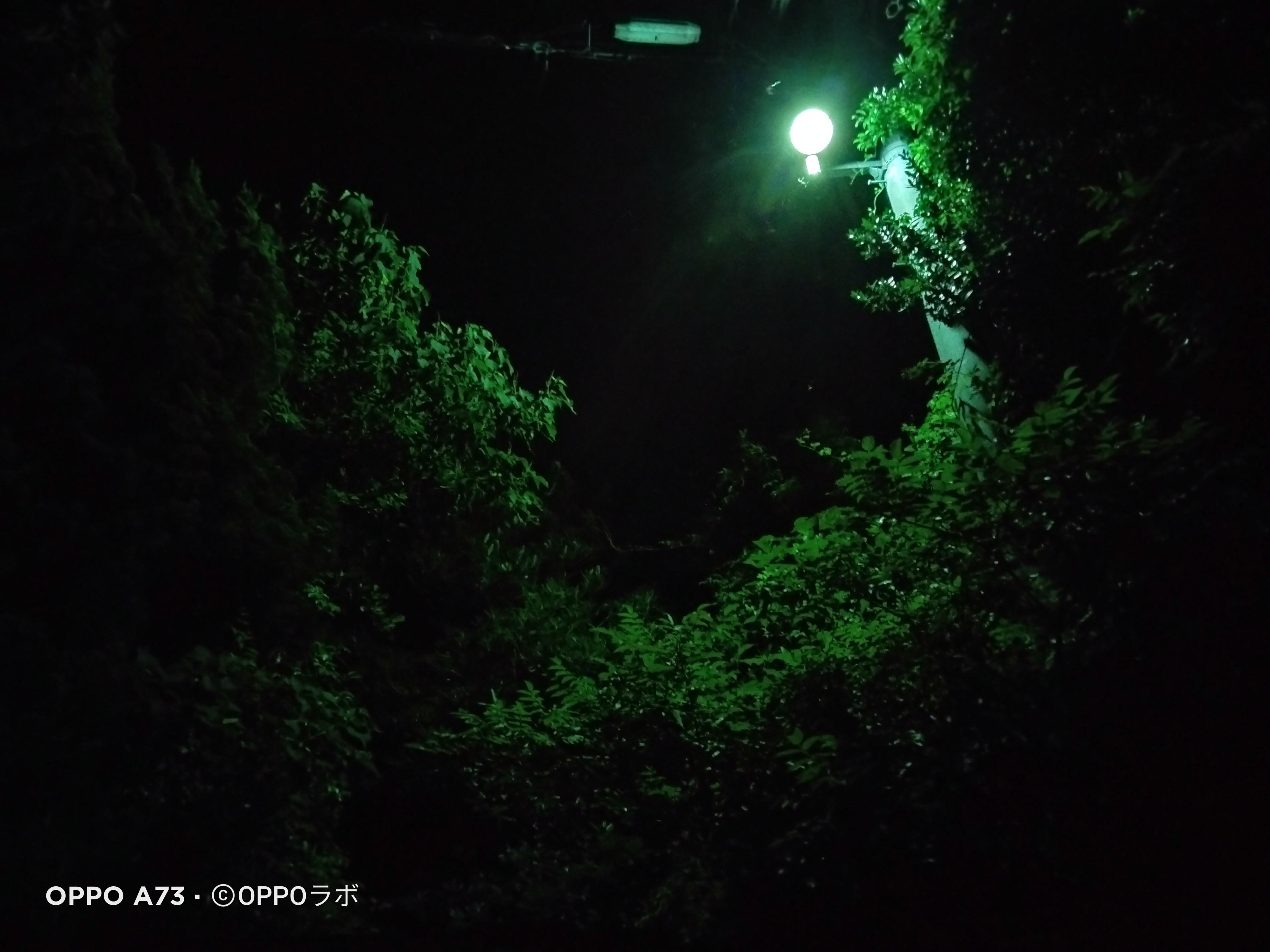 f:id:Azusa_Hirano:20210705112759j:plain