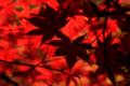 京都新聞写真コンテスト 「赤」
