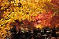 京都新聞写真コンテスト 「紅葉の賑わい」