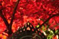 京都新聞写真コンテスト 「燃ゆる秋」