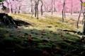 京都新聞写真コンテスト うつろい