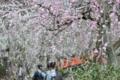 京都新聞写真コンテスト 梅香る