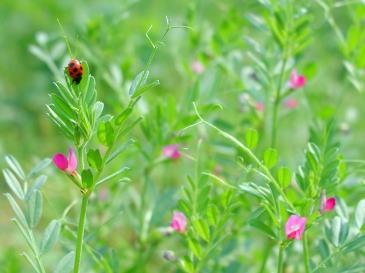 赤色の花とてんとう虫