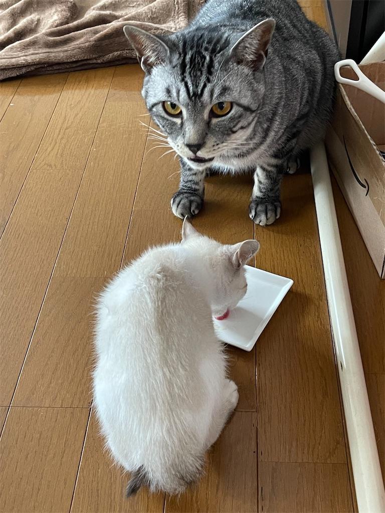 f:id:BODYSTOICshizuoka:20210730150648j:image