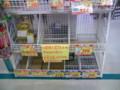 [ネタ][災害]某スーパーで電池ほとんど品切れ。九州でそれやるかぁ? (^_^;)