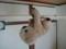 ナマケモノのコアラ