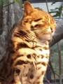 [生物]某所で飼われているがイエネコではない猫