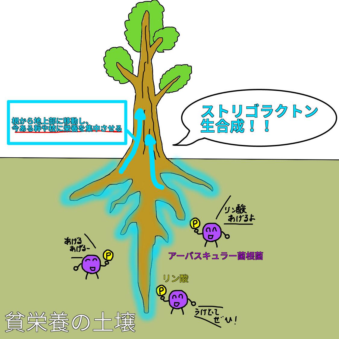 f:id:BambooBornY:20201201205625j:plain
