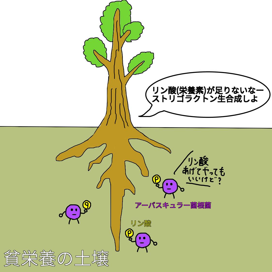 f:id:BambooBornY:20201201205740j:plain