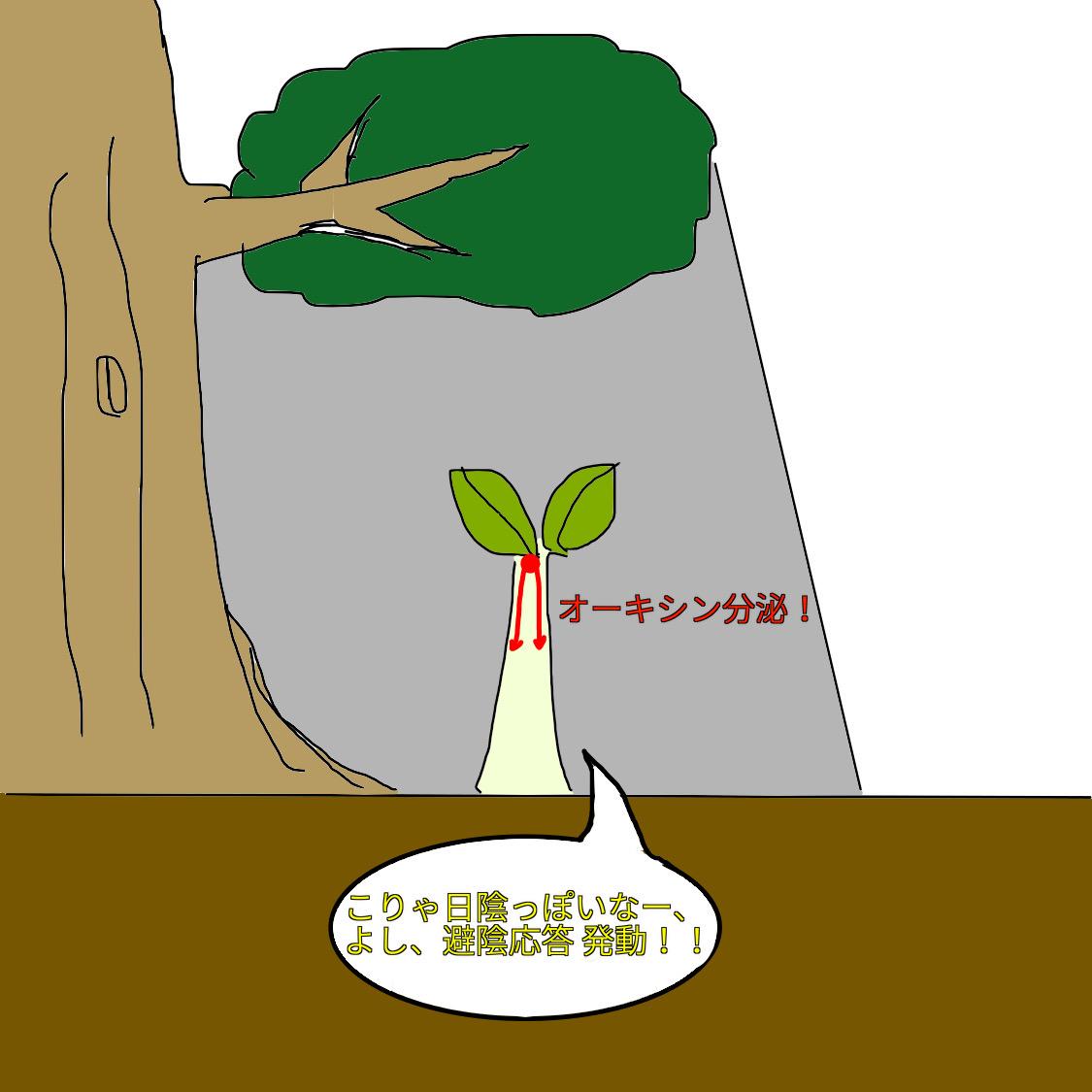 f:id:BambooBornY:20201201212906j:plain