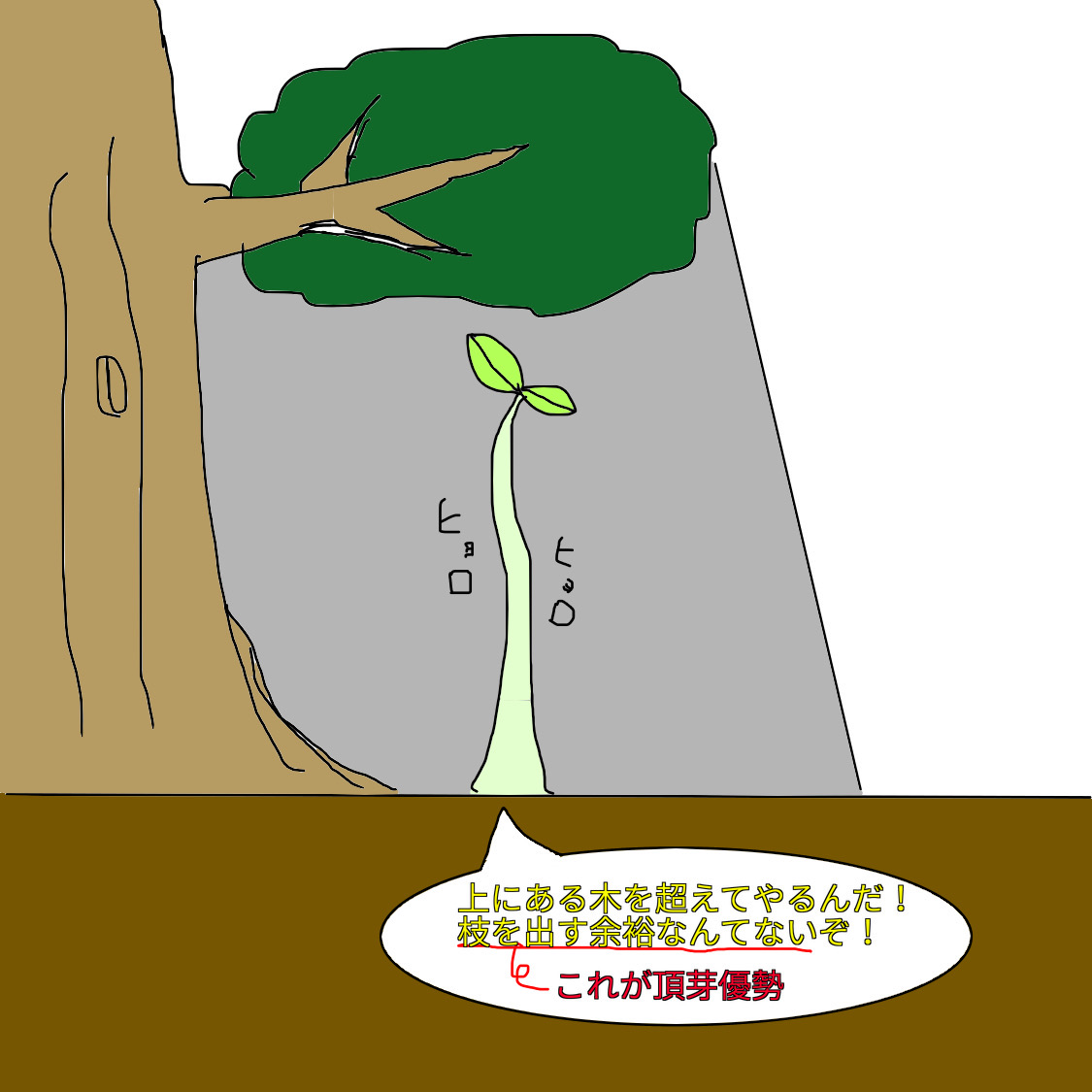 f:id:BambooBornY:20201201212920j:plain
