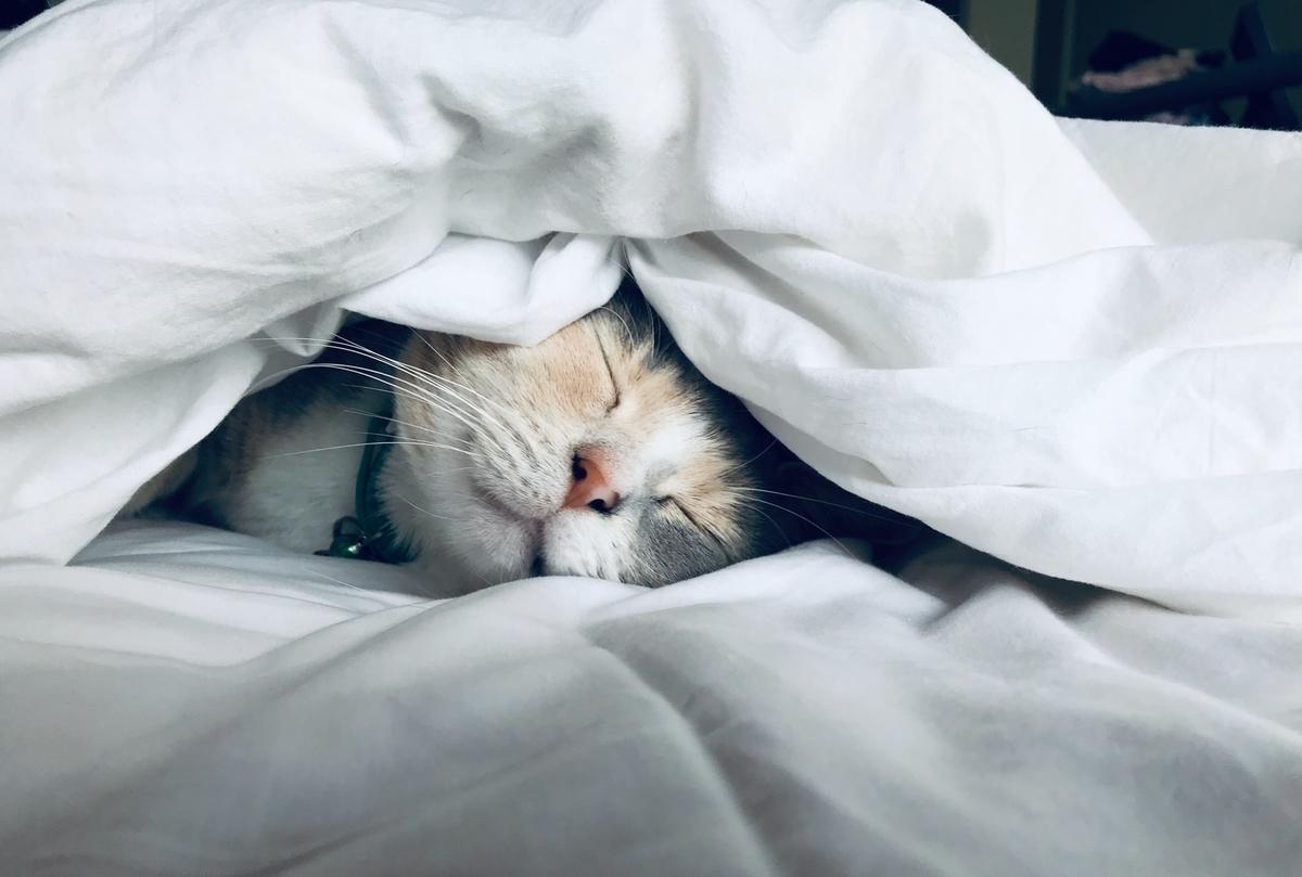 運動メリット【実体験】寝付きが良く睡眠の質が向上