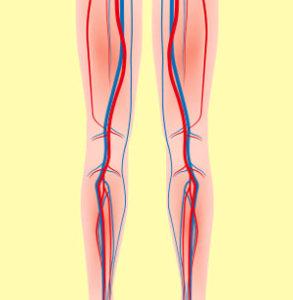 クリスチャンココのマッサージ効果が出る脚の血管やリンパのイラスト