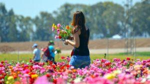 花畑で花を摘む女性