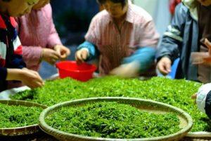 お茶を作る人々