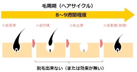 ヒゲ脱毛では複数の回数の医療レーザー機器の照射が必要である根拠として、毛周期が約2か月であることを示す画像