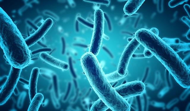 バクテリアの画像
