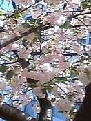 f:id:Bisous-Bijoux:20040416125621j:image