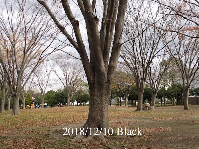 f:id:Black5:20181210130341j:plain