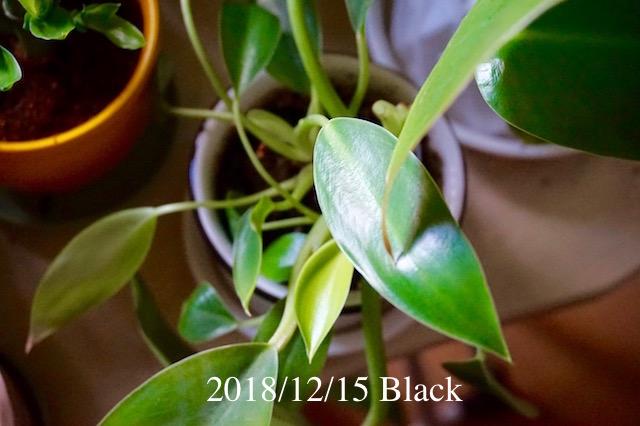f:id:Black5:20181215154044j:plain