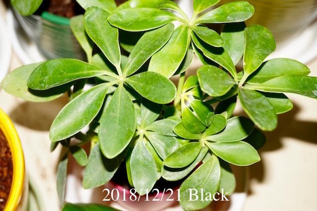 f:id:Black5:20181221195232j:plain