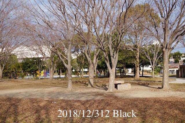 f:id:Black5:20181231183643j:plain