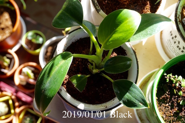 f:id:Black5:20190101103404j:plain