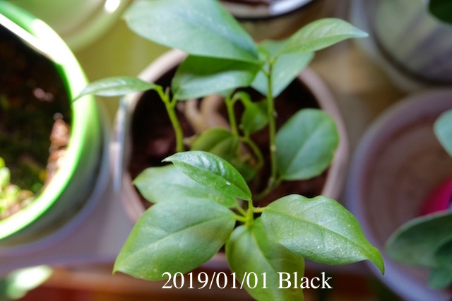 f:id:Black5:20190101103437j:plain