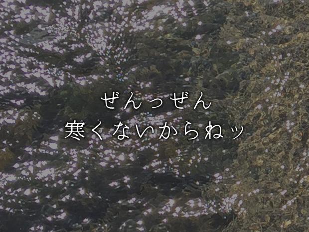 f:id:Bliss_Blink:20170116202115j:plain