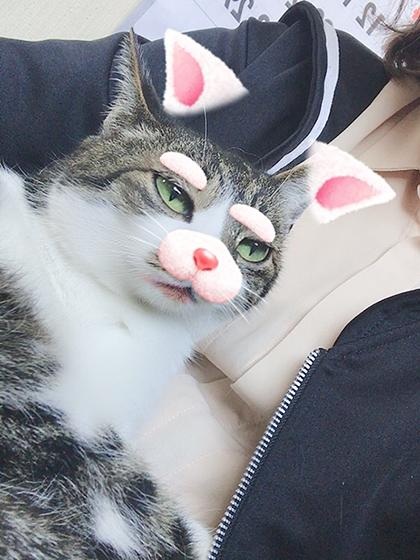 猫ジト目snow
