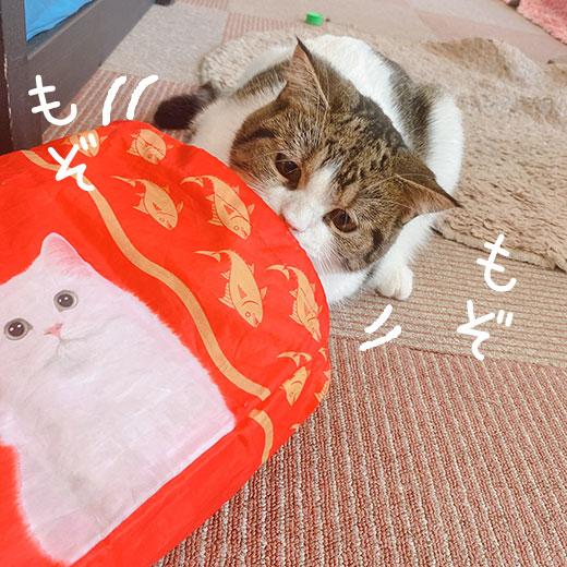 猫カフェ猫家
