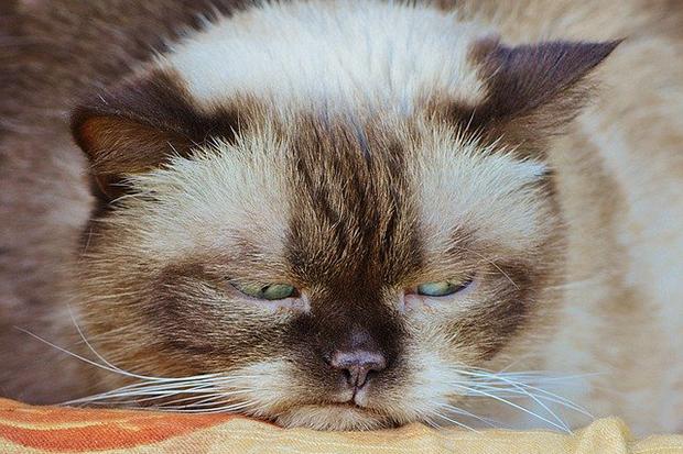 イライラ不機嫌猫