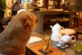 [犬カフェ]横浜元町「茶倉」
