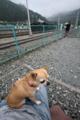 [犬]三峰口駅にて
