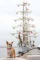 [犬]ふうこメキシコ海軍の練習帆船クワウテモックと