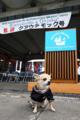 [犬]メキシコ海軍の練習帆船クワウテモック歓迎式典にて