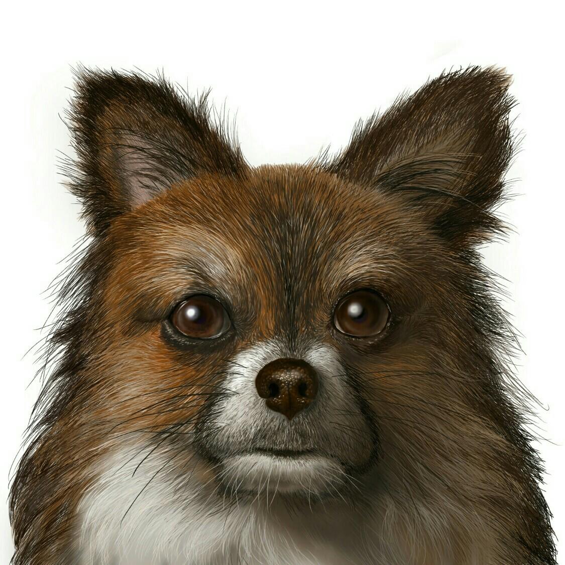 デジタルリアルな犬チワワを描くポイント 今日このごろ