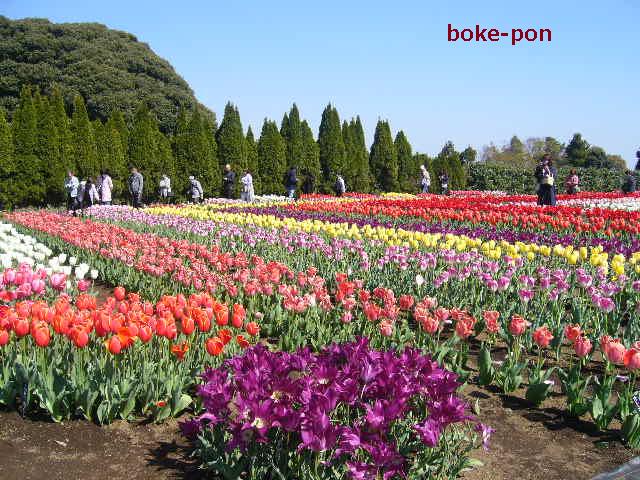 f:id:Boke-Boke:20190413191452p:plain