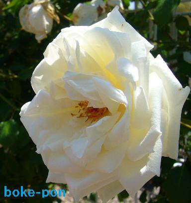 f:id:Boke-Boke:20190526010144p:plain