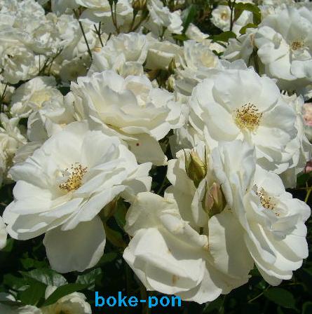 f:id:Boke-Boke:20190526170023p:plain