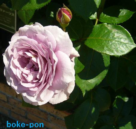 f:id:Boke-Boke:20190526173415p:plain