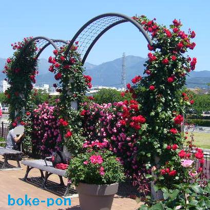 f:id:Boke-Boke:20190526173534p:plain