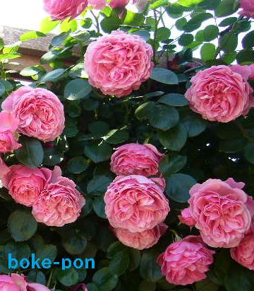 f:id:Boke-Boke:20190526173613p:plain